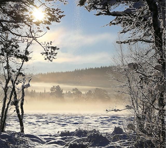 Tungården Jul och Nyår