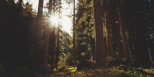 Log-Out läger med Topphälsa 2019