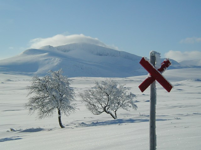 Vintertur med guide i februari och mars